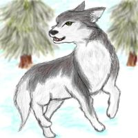 Wolf by xcrystalclearx