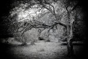 The Hanging Tree by RickHaigh