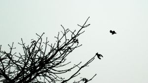 Birds 2 by linus9302