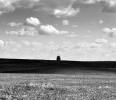 The field and the tree by orlibraorli