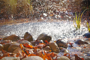 Red leaves and water in motion by Solacen