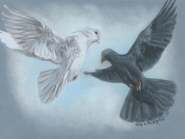 Black and White Doves by mkmars
