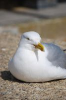 Seagull by BEH1NDTHET1MES