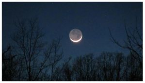 Moon and Trees - January 2012 by CrystalMarineGallery