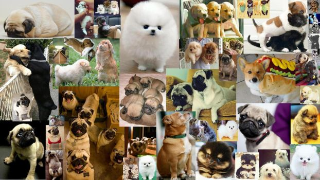 Puppydog collage wallpaper by FoggyPebble