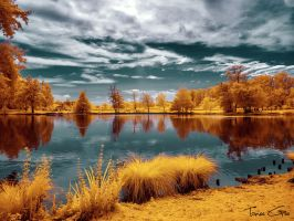 Majolan's Park - { Infrared } by ToneeGee