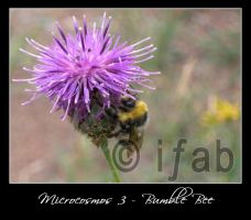 Microcosmos 3 - Bumble Bee by iFab