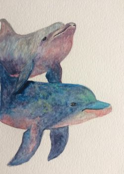 Watercolor dolphin by seakliff