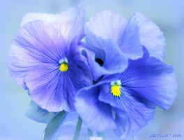 July is blue 11 by martaraff