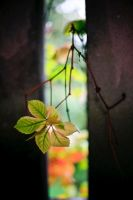 Leaves of autumn by luka567