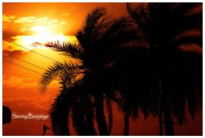 palm trees by sunnybarjatya