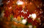 'Autumn shapes II' - wide by V-ace