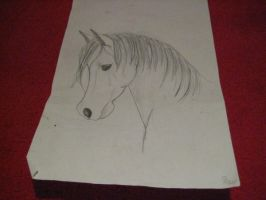 Horse drawing by ravdenmark