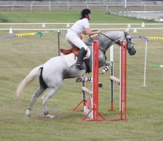 STOCK Showjumping 463 by aussiegal7