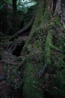 A Tree's Time by FreeakStock