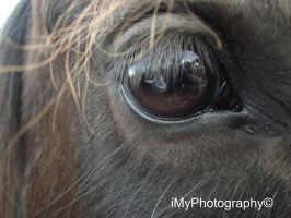 Through a horses eye . by iMyPhotography