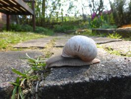 spring and snail by cacharoth