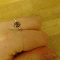 Fossils + silver : Delicate by entanglement