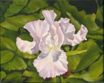 White Iris Oil Painting by MeadowDelights