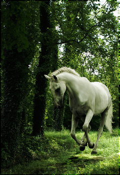 White Horse by xxblithe