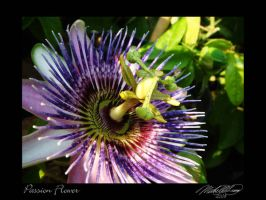Passion Flower Blue by DistantVisions