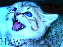.Hawkfrost. by Kitty-Wolf