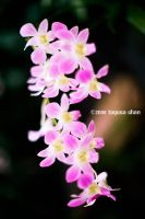 Orchids : 01 by Togusa208