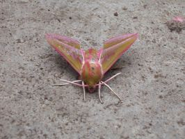 Moth by pipilo