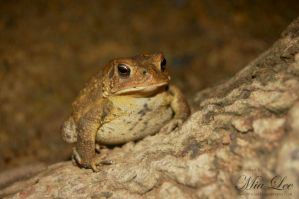 Toad Nature 02 by MiaLeePhotography