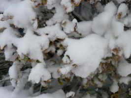 Snow Leafs by LW-Lucy