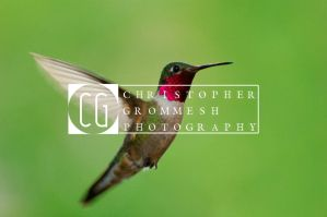 Hummingbird by transfigurated