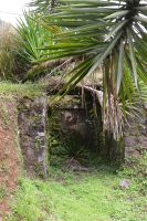 Stone wall and subtropical vegetation by A1Z2E3R