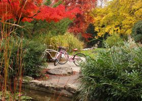 Pink Bicycles in Autumn by AgiVega