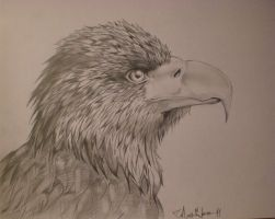 _Golden Eagle_ by The-true-MaCK
