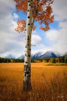 Autumn Meadow by jessespeer