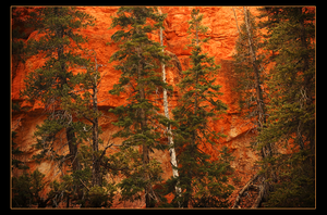 Bryce Canyon Wall by narmansk8