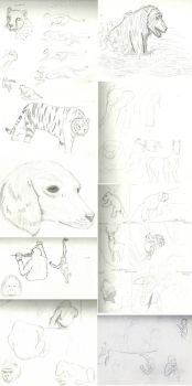 Animal Sketchs #1 by ArousingSoul