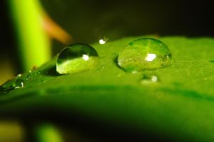 Waterdrops on a leaf no. 2 by luka567