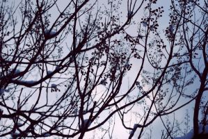 sky and branches II by Kitty-Kitty-Kit-Kat