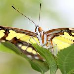 Butterfly 3 square by s-kmp