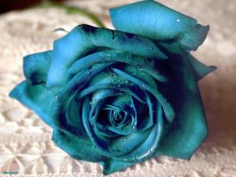 Blue Rose by Orion1115