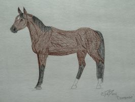 Comanche by obsidianhart
