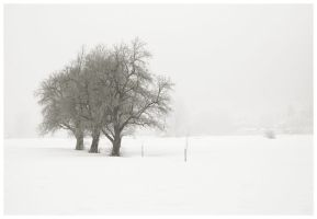 Trees On White by knuta