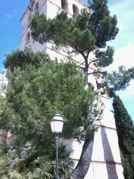 Tower with tree (Mallorca) by badencosmo