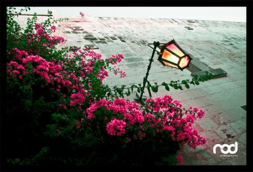 Flowers with Lamp at Mdina by MaNkIbOwN