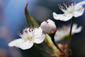 Spring Blossoms by Tracys-Place