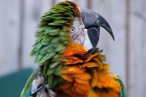 Longleat Parrot III by garethjns