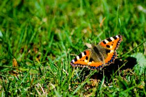 The first butterfly catched this year by Markuslajer