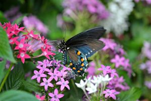 Butterfly on Flowers by MorganLeighhDarlingg