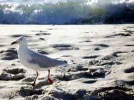 Seagull Summer by Waitingforfuntocome